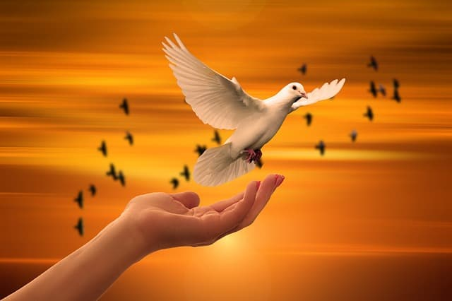 Picture of a bird in a hand symbolising the angel number 1221